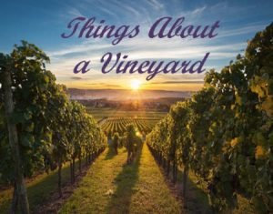 Things About a Vineyard