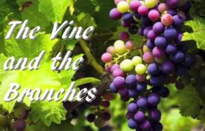 The Vine and the Branches